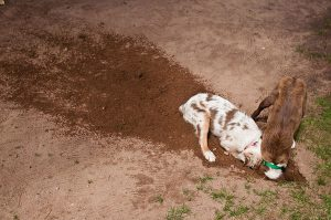 Собака боится оставаться одна дома (c) http://www.flickr.com/photos/debgray/