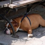 Собака в летнюю жару (c) davedehetre, http://www.flickr.com/photos/davedehetre/