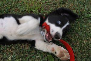 садка, эрекция у собаки (c) fuxoft, http://www.flickr.com/photos/fuxoft/