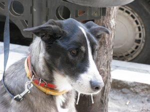 сигналы примирения собак (c) wmshc_kiwi, http://www.flickr.com/photos/wmshc_kiwitayro/