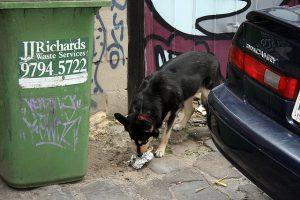 собака кусает поводок (c) redskunk, http://www.flickr.com/photos/redskunk/