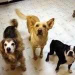 Синдром маленького цыпленка у тренера собак (c) Joanna Bourne, http://www.flickr.com/photos/66992990@N00/