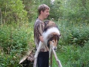 Глухая и слепая собака по имени Грей