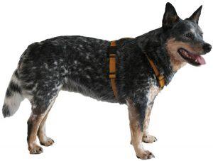 Хорошая шлейка для собак. Вид сбоку