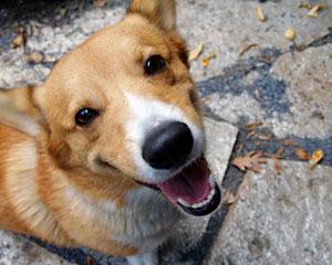 Скажите собаке Привет (c) Rick Knight, flickr.com