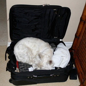 Позволяйте собаке участвовать в ваших делах (c) Randy Robertson, flickr.com