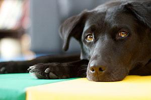 Разговаривайте со своей собакой (c) Alan Levine, flickr.com