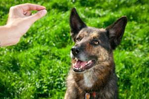Научите собаку альтернативным действиям