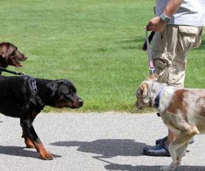 Встреча собак
