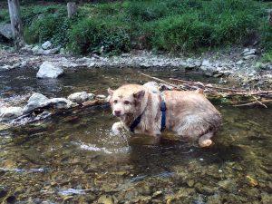 Собака выбирает маршрут для прогулки