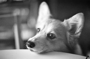Почему мы относимся негативно к готовым кормам для собак