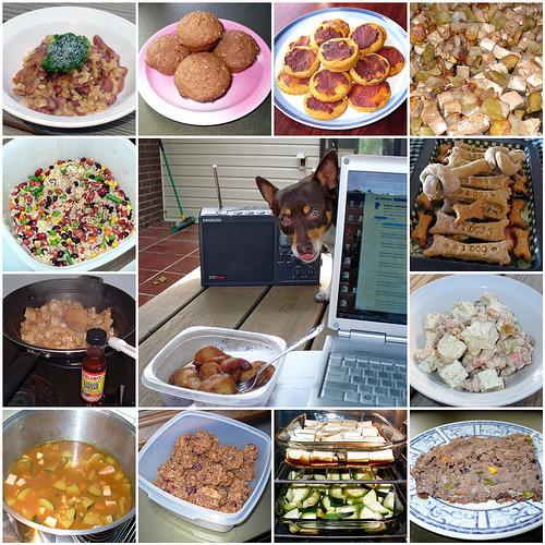 Вегетарианское питание или веганское питание для собак