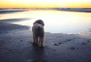 собака на берегу