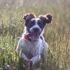 желания и потребности собак
