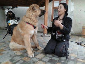 Общение с кавказской овчаркой